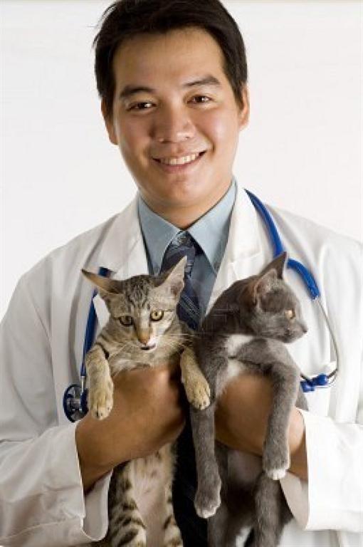 Male Veterinarian